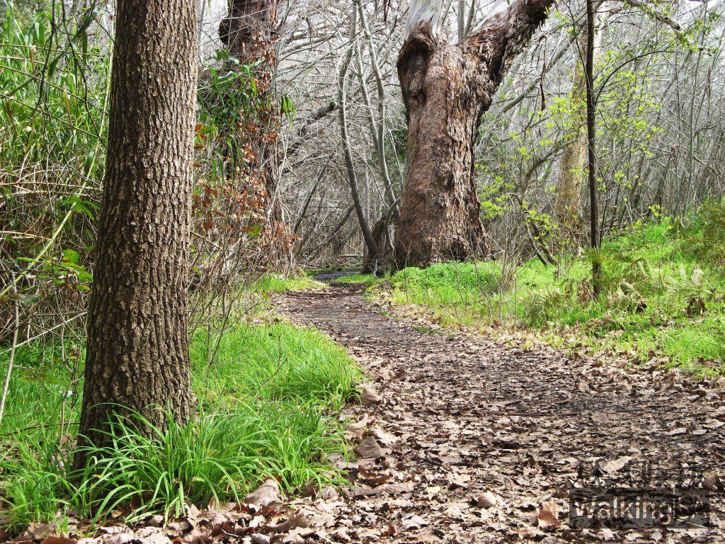 Heritage Tree Walk trail