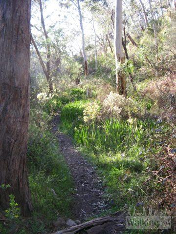 Walking in Main Valley