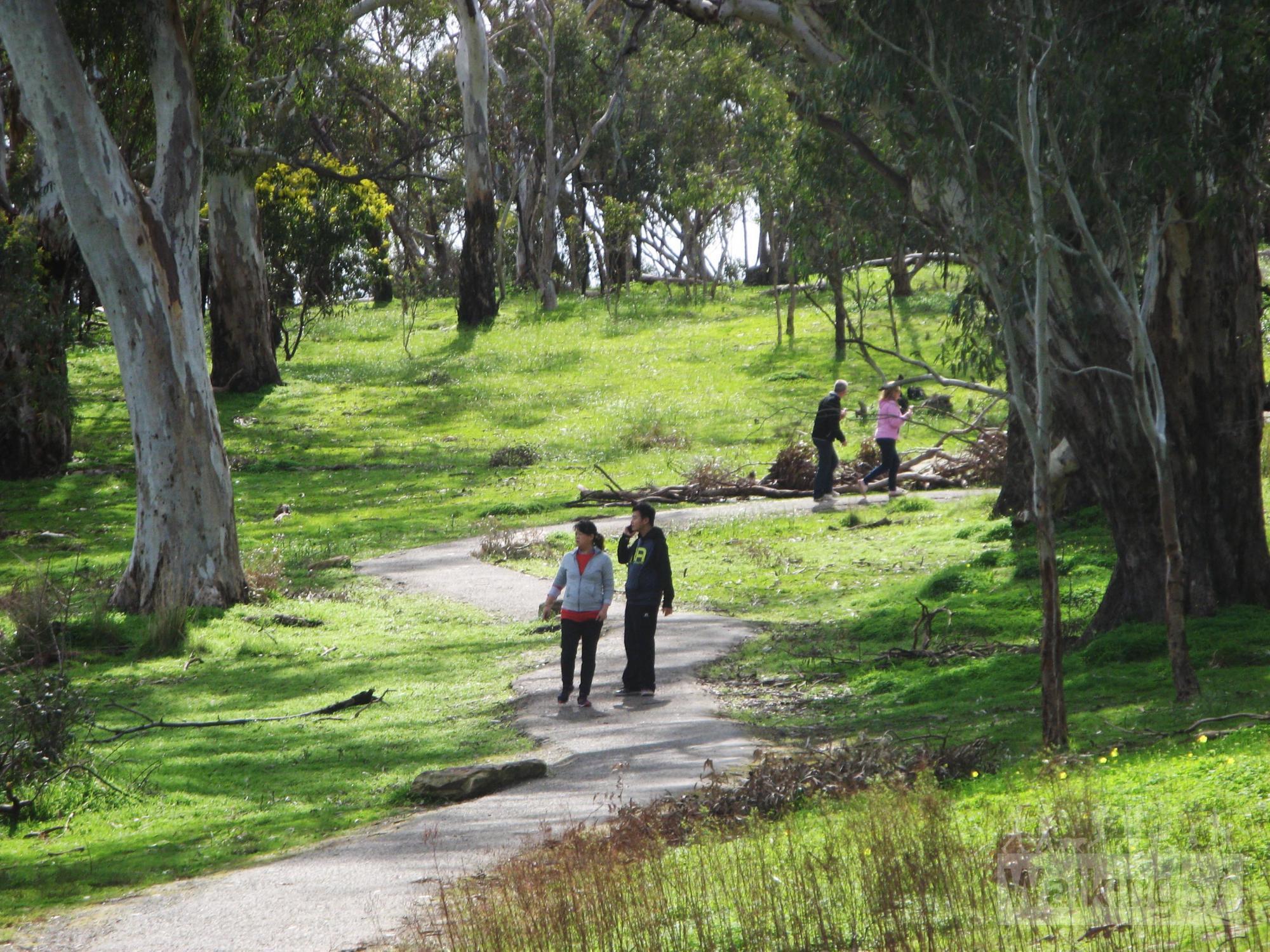Lorikeet Loop Walk, Belair National Park | Find a Place to