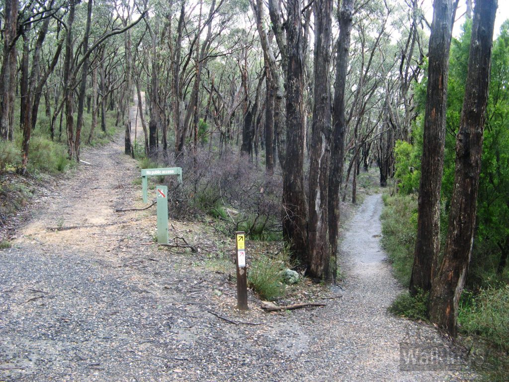 After walking on Robins Track for just 150m or so, follow the walking trail to the right