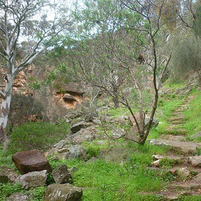 Ambers Gully Hike