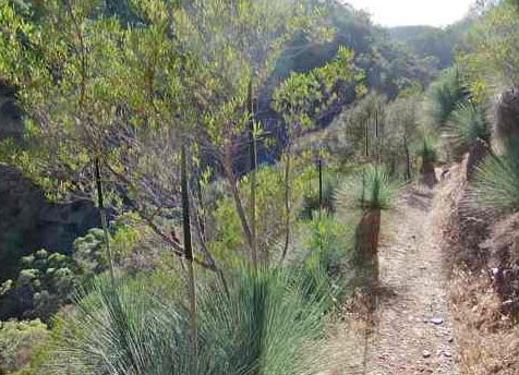 Chambers Gully Walking Trail, around the Sugarloaf
