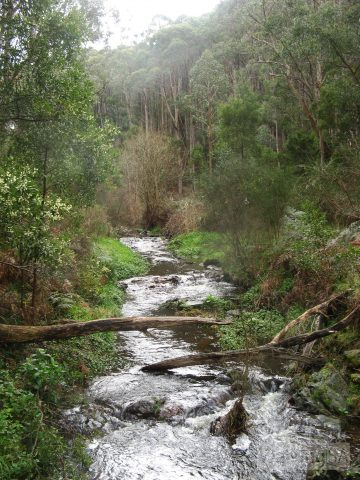 Cox Creek from Davenport Bridge, in Mount George Conservation Park