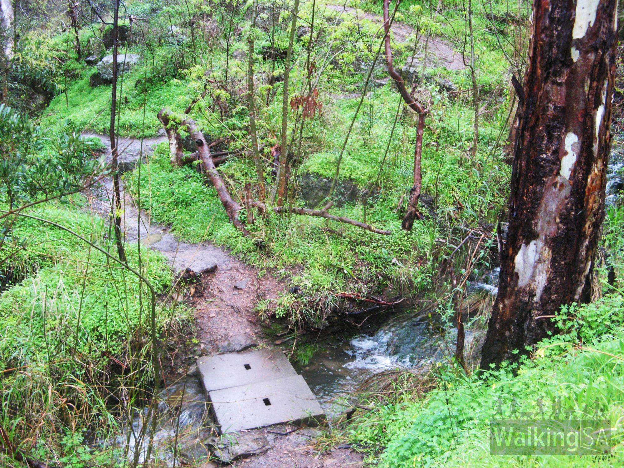 Sturt Gorge Loop along River Trail | Find a Place to Walk