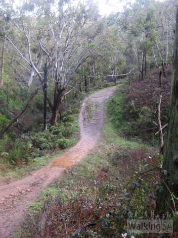 Its getting steeper now, Chambers Gully, Chambers Hike, Bartrill Spur Track