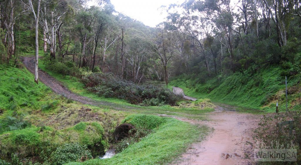 Junction of Chambers Gully Track and Widow Maker