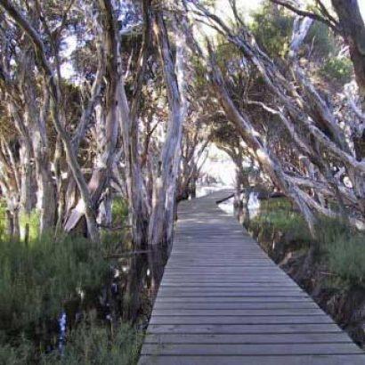 Lagoon Trail, Hindmarsh River Estuary