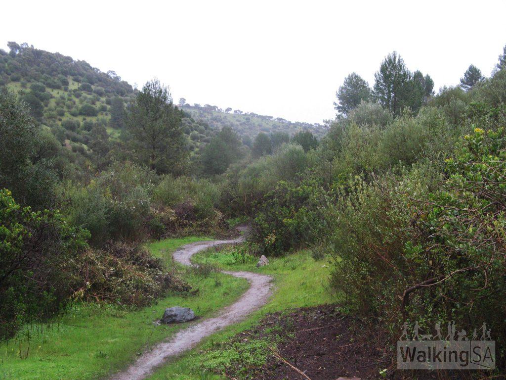 Lomandra Trail
