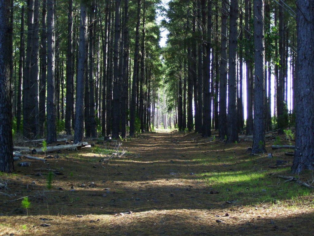 Onkeeta Trail, Kuitpo Forest