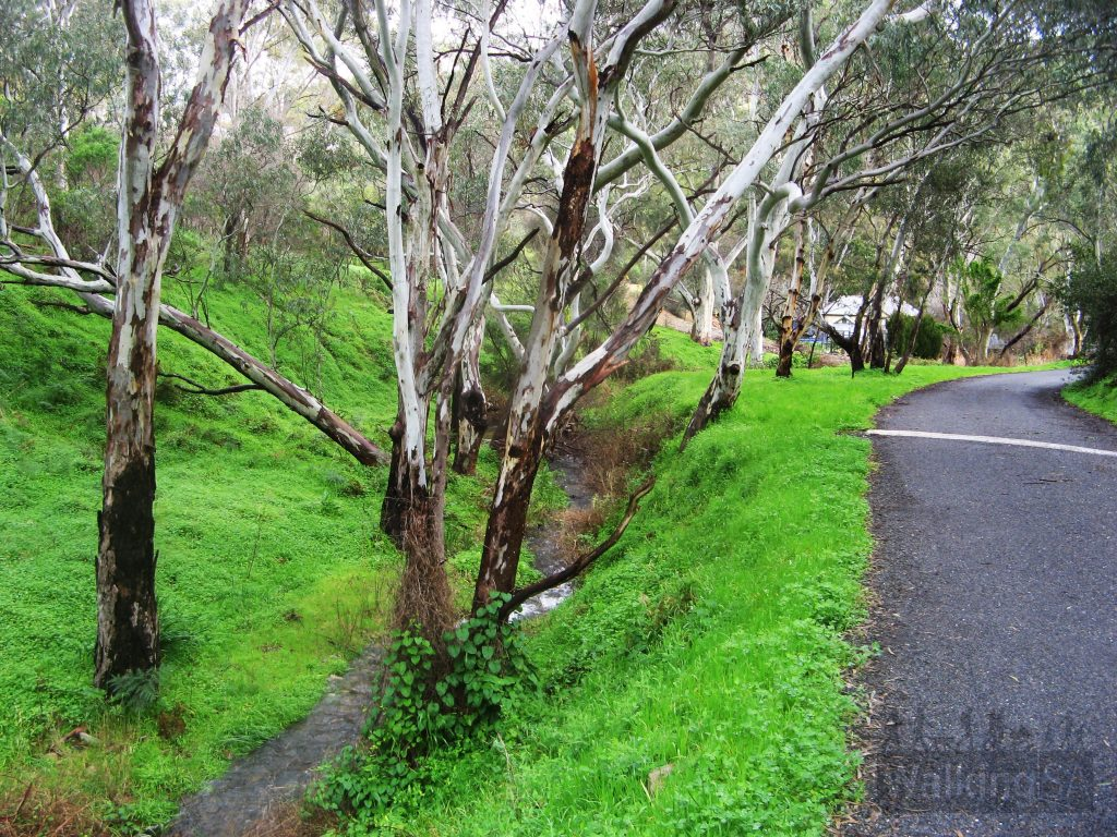 Start of the Chambers Gully