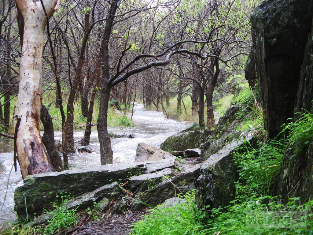 Sturt River, on the River Trail