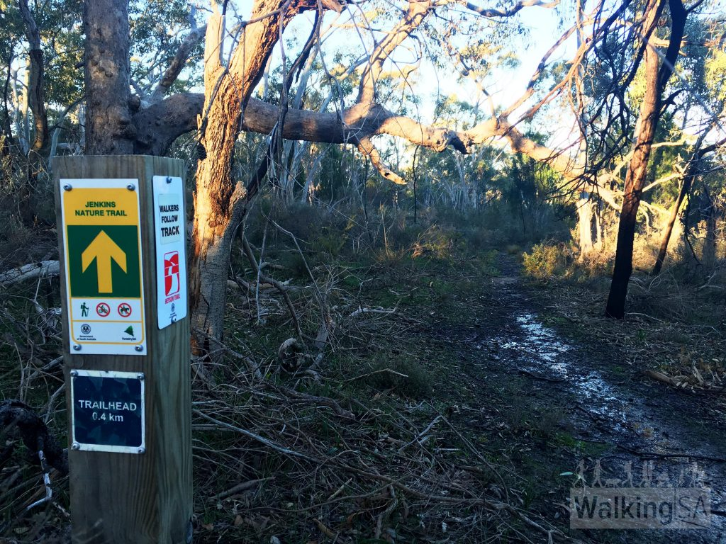 "The Jenkins Scrub Walking Trail is well marked, thanks to the work of the <a href=""https://www.walkingtrailssupportgroup.org.au/"">Walking Trails Support Group</a>"