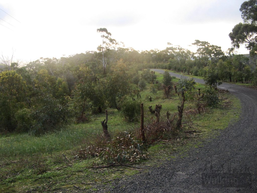 Nursery branches for the koalas in Cleland Wildlife Park, on the Long Ridge Track