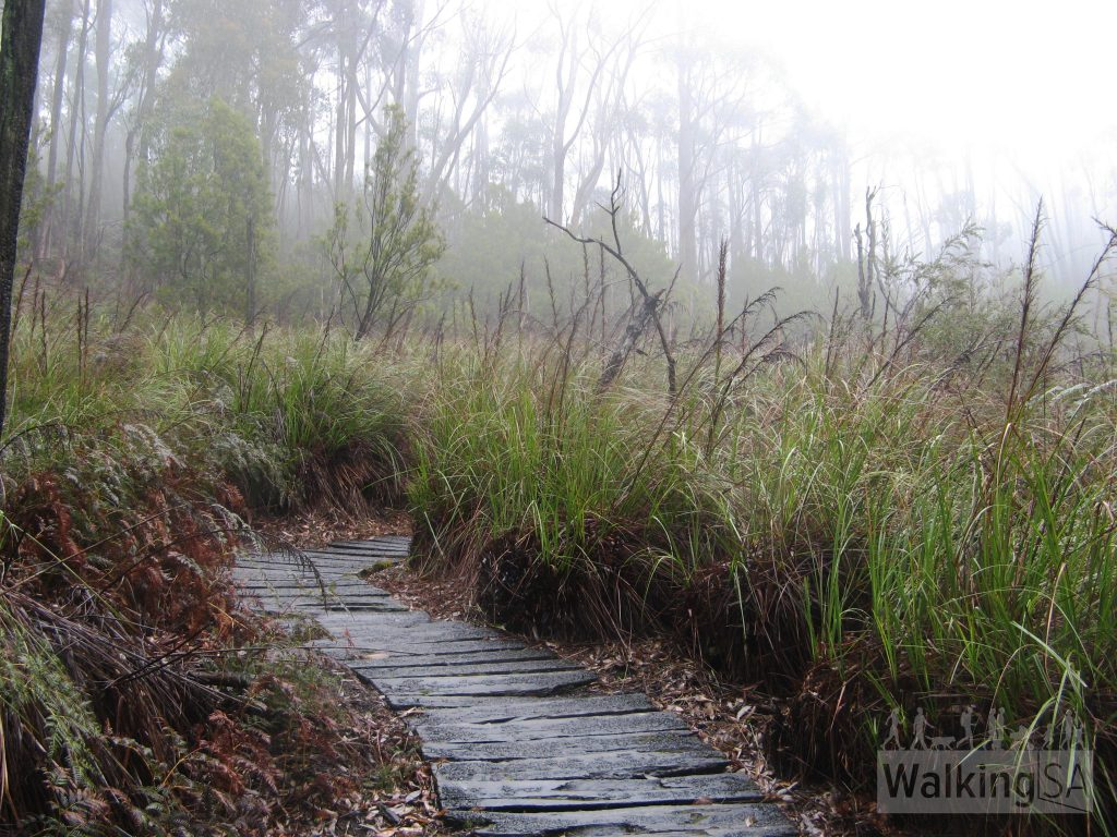 The Nature Trail, Mt Lofty Botanical Gardens, walking path