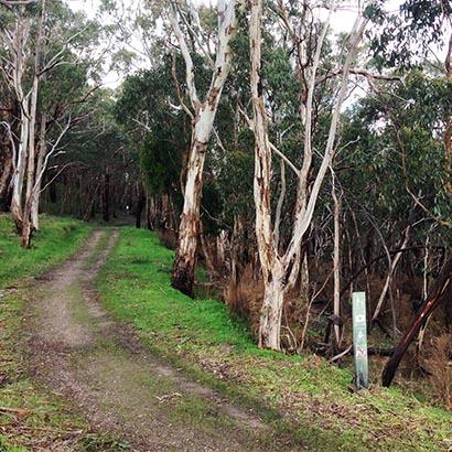 Wine Shanty Hike, Cleland Conservation Park