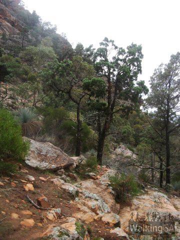 The walking trail up Devil's Peak