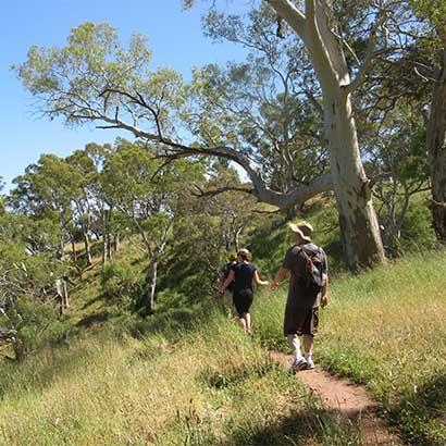 Waite Conservation Reserve & Brownhill Creek Walk