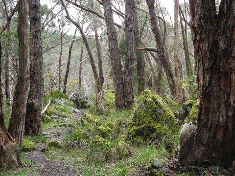Walk along the Heysen Trail from Mount Lofty to Bridgewater