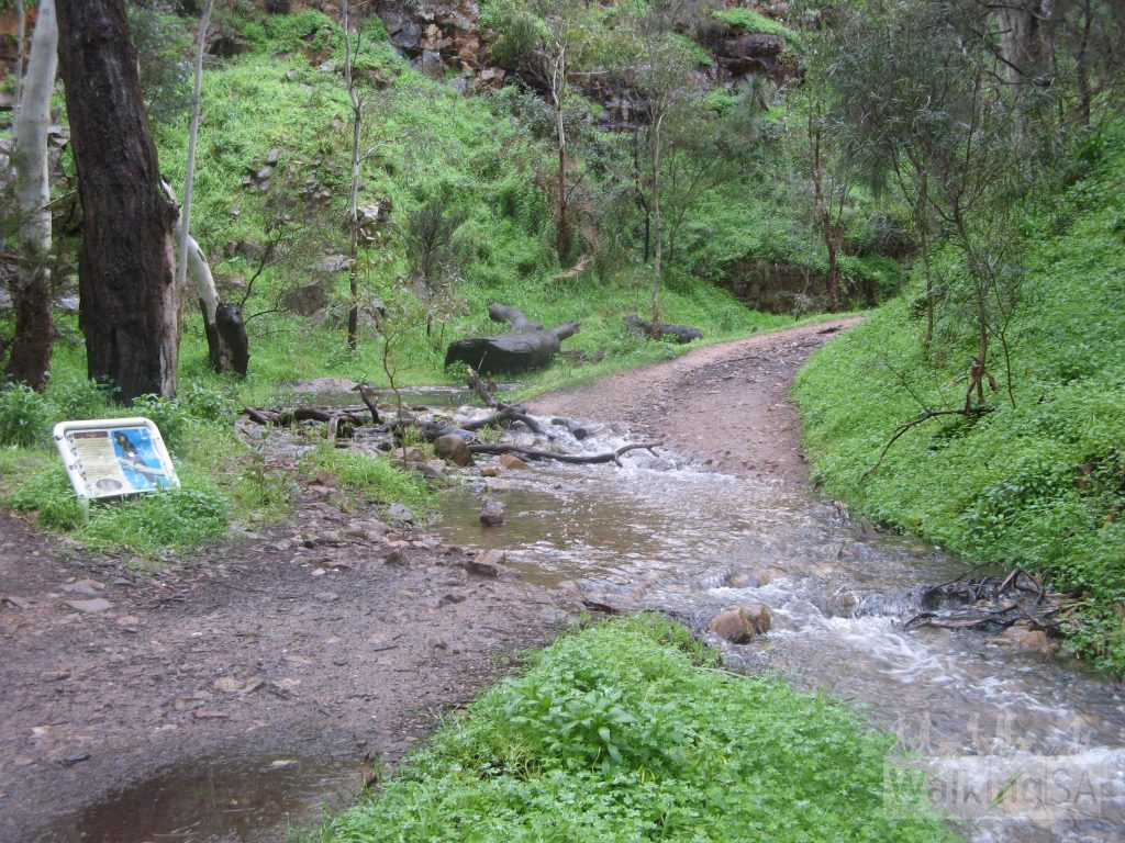 Walking along the Chambers Gully Track