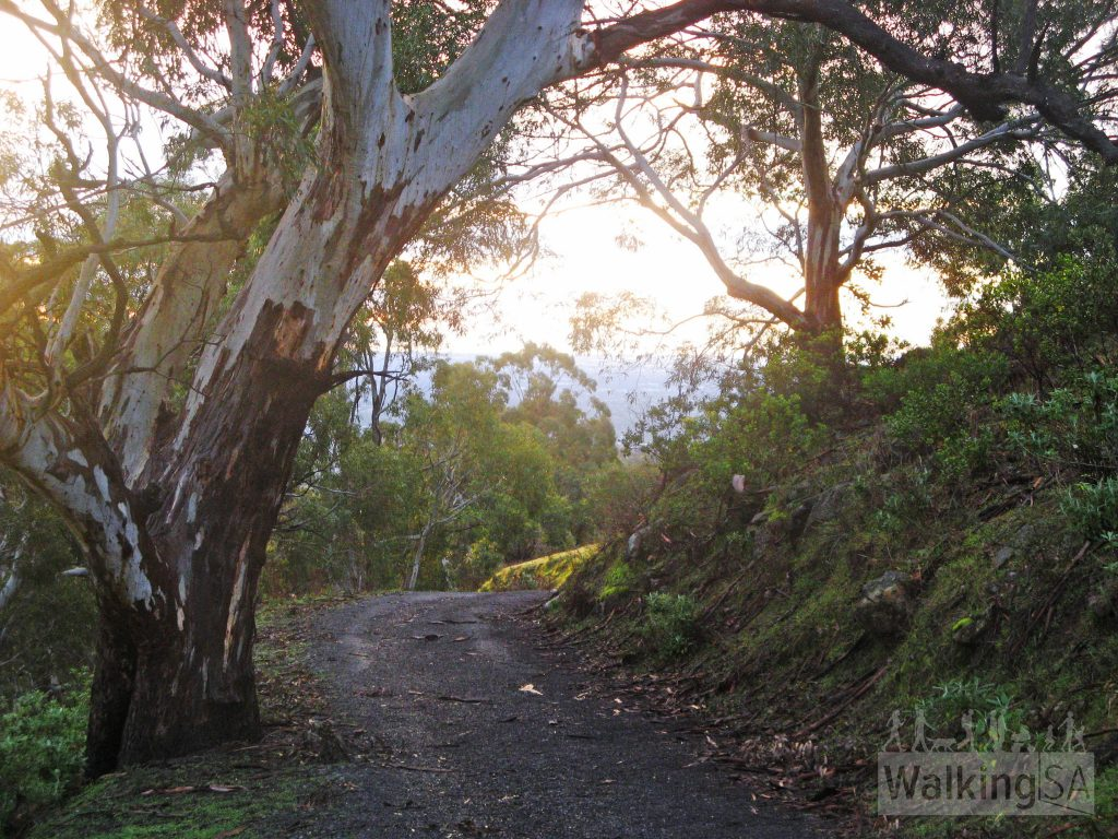 Walking down Long Ridge Track, Cleland Conservation Park