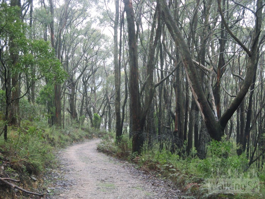 Walking down from the summit of Mt Lofty