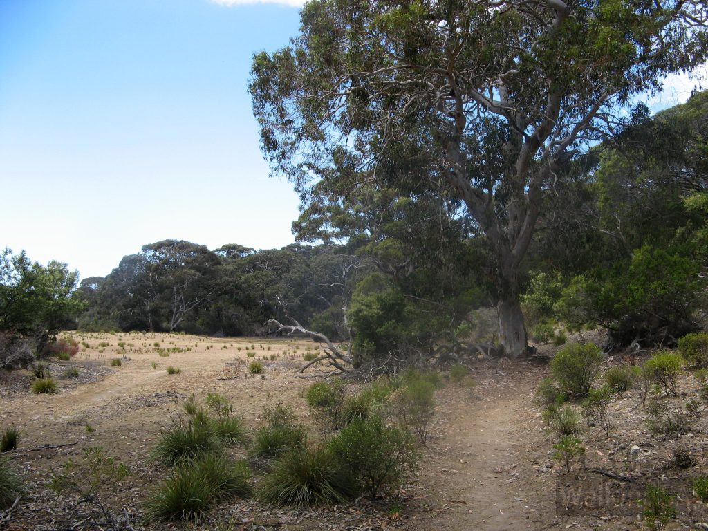 Walking near Grassdale Lagoon