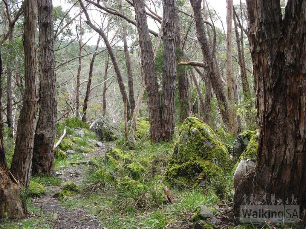 Walking the Heysen Trail in Mount George Conservation Park