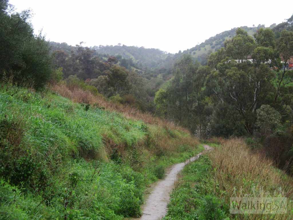 Walking towards Sturt Gorge