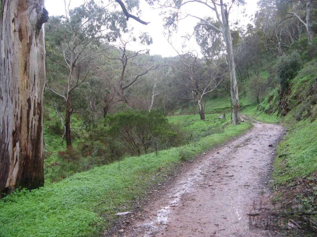 Walking up Chambers Gully Track