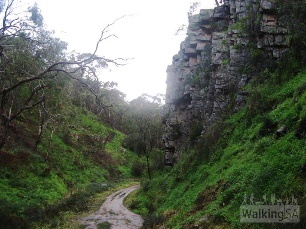 Walking up Chambers Gully Track past cliffs