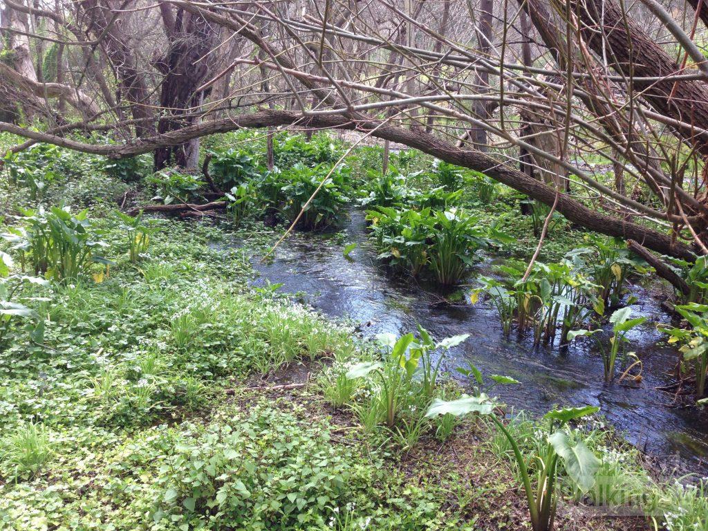 Wetlands beside the walking trail