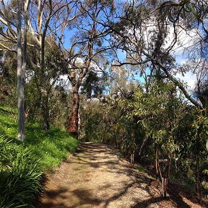 Waterfall Gully Road Walking Trail (along Waterfall Gully Road)
