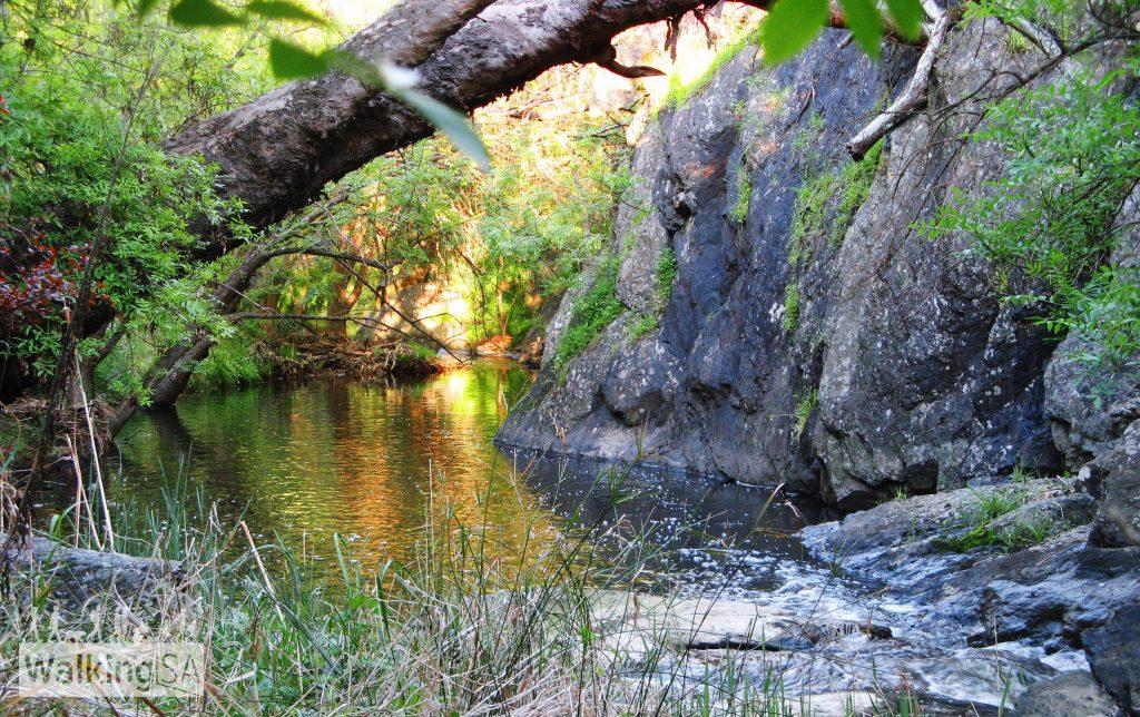 River Trail, Sturt Gorge