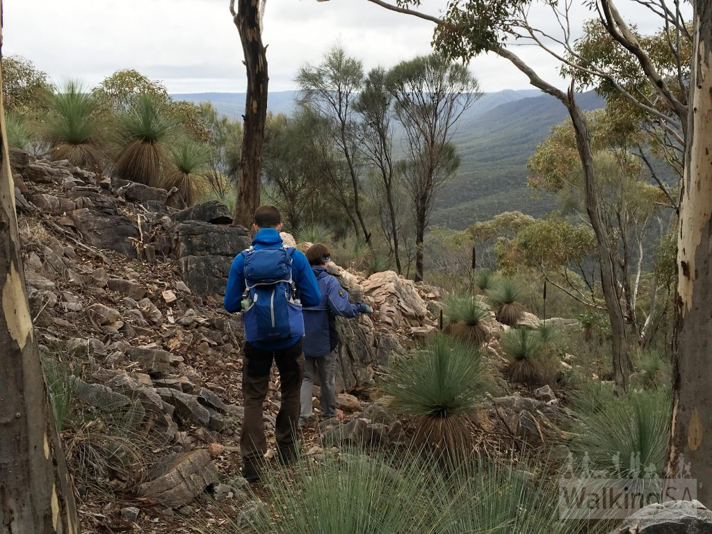 Hiking down from the summit of Mt Cavern, with views up Mambray Creek