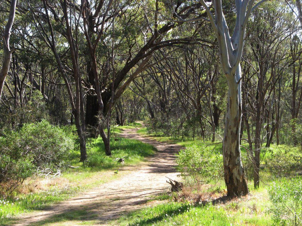 Walking the Wattle Trail