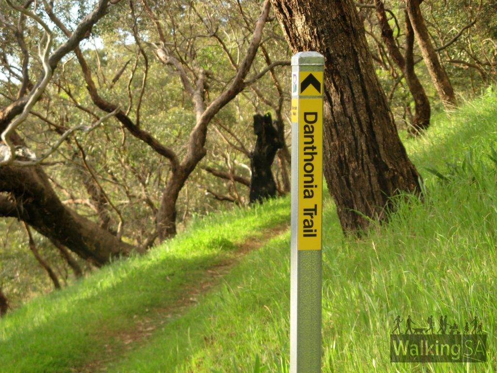 Danthonia Trail through Danthonia Reserve