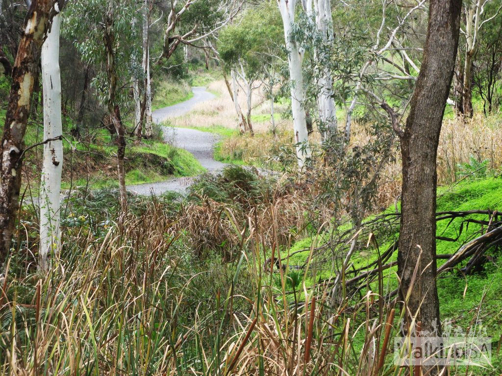 Water Gully Track