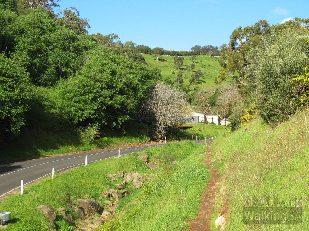 Walking on trail beside Hayward Drive