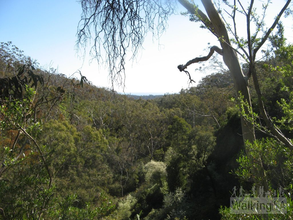 Views from the Lower Waterfall in Belair National Park