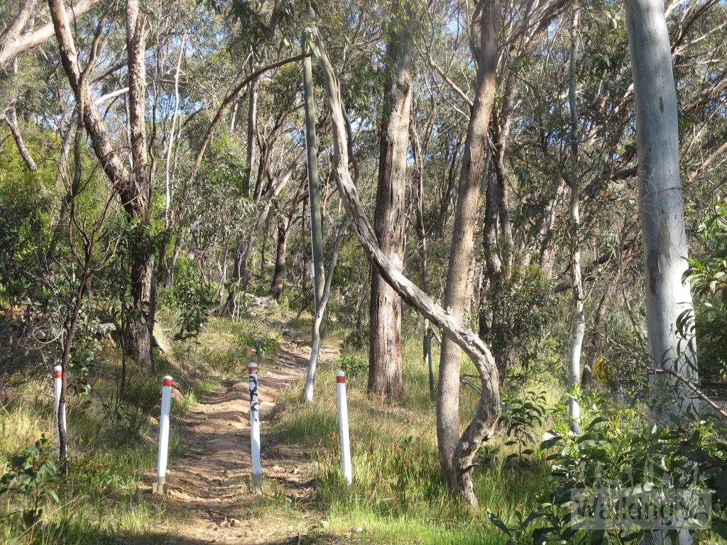 Following the walking track beside Old Belair Road