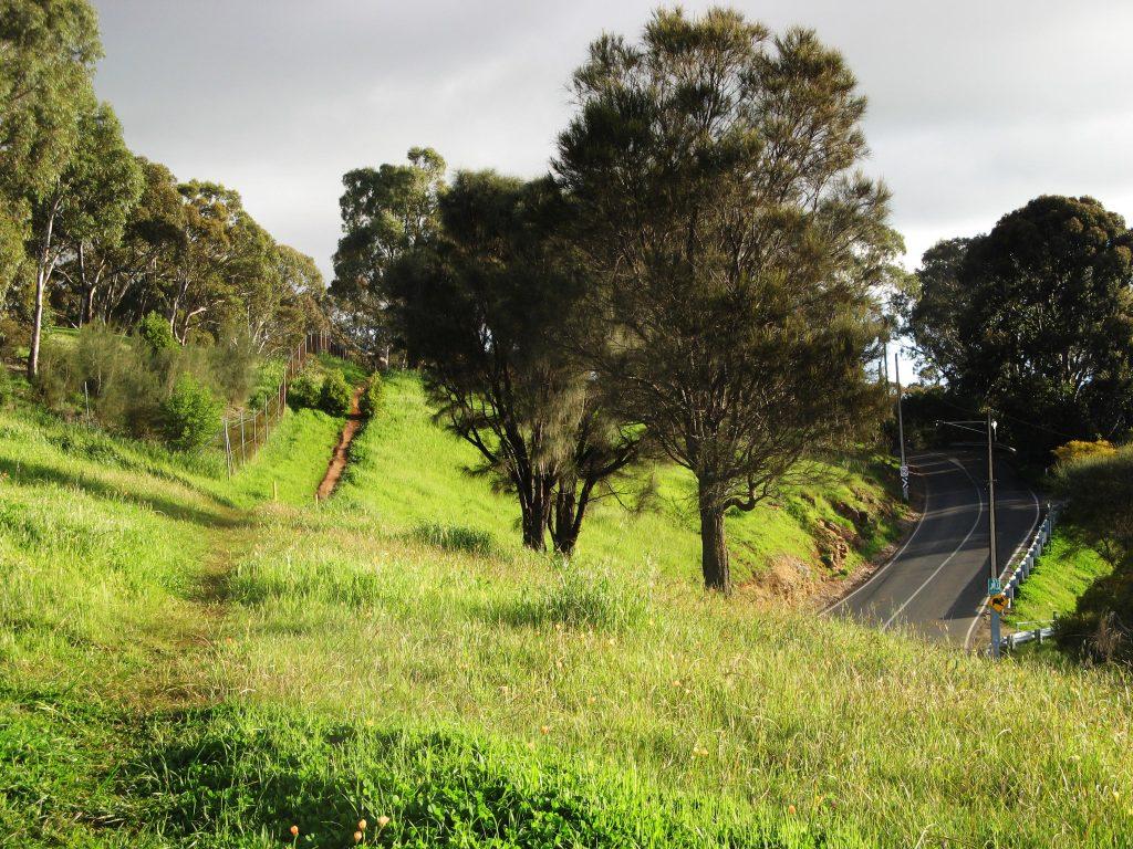 Walking along the trail beside Mount Osmond Road, Burnside Walking Trails