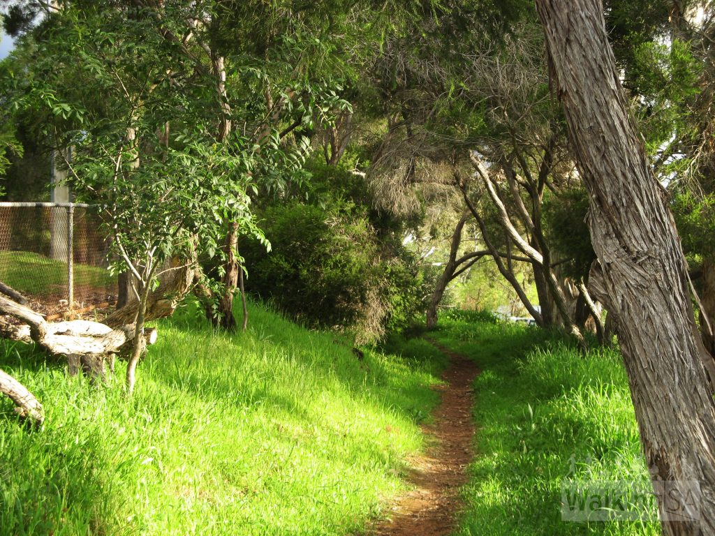 Walking along the trail beside Mount Osmond Road