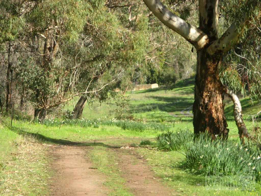 Walking towards Newmans Nursery