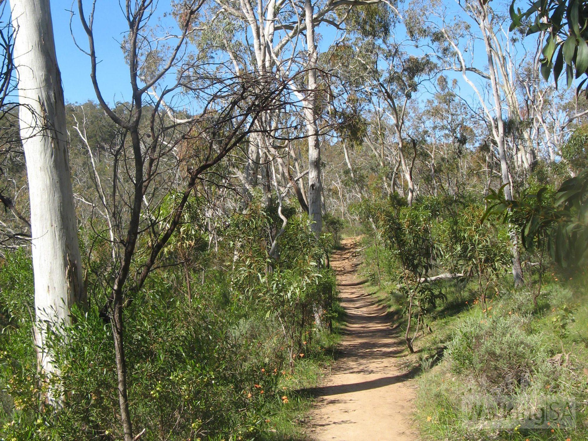 Brownhill Creek And Belair Hike Loop Walking Sa