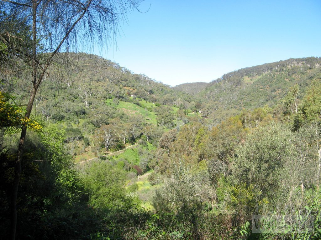 Views into Brownhill Creek from the Yurrebilla Trail