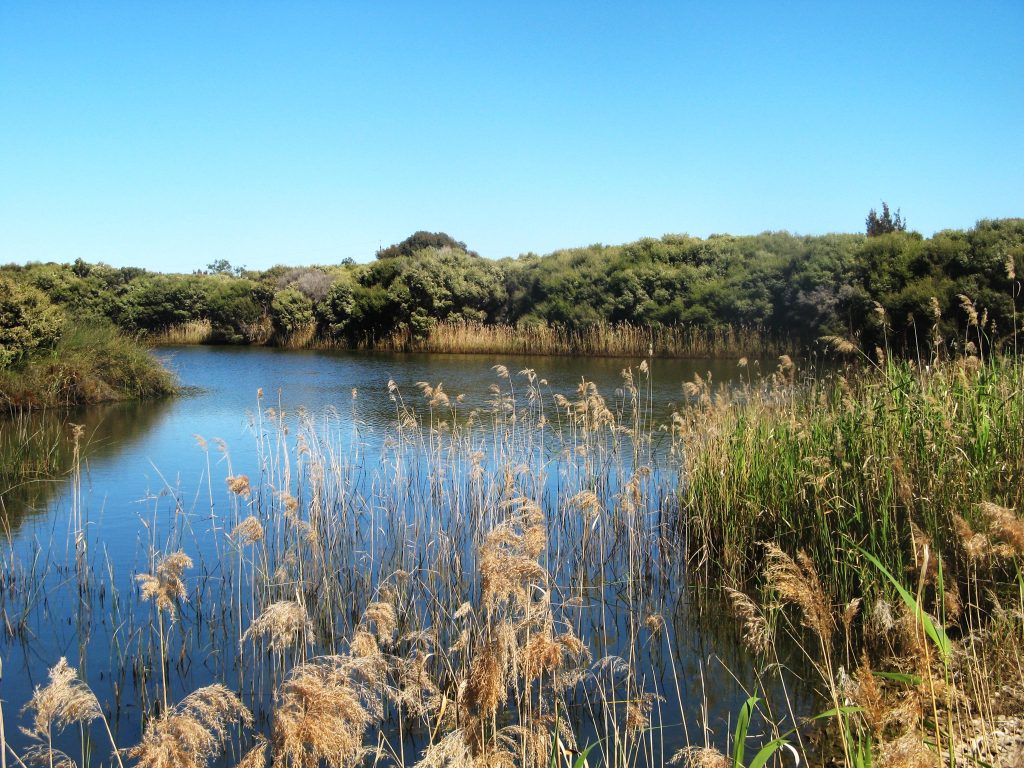 Greenfields Wetlands Nature Trail
