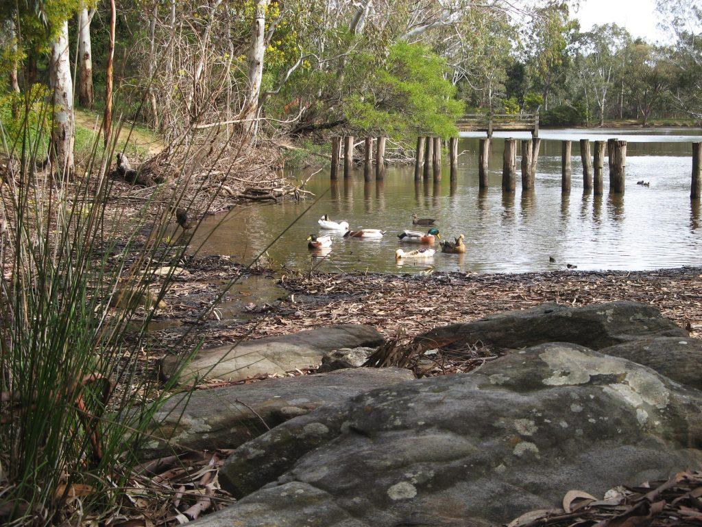 Wood Duck Walk, Belair National Park