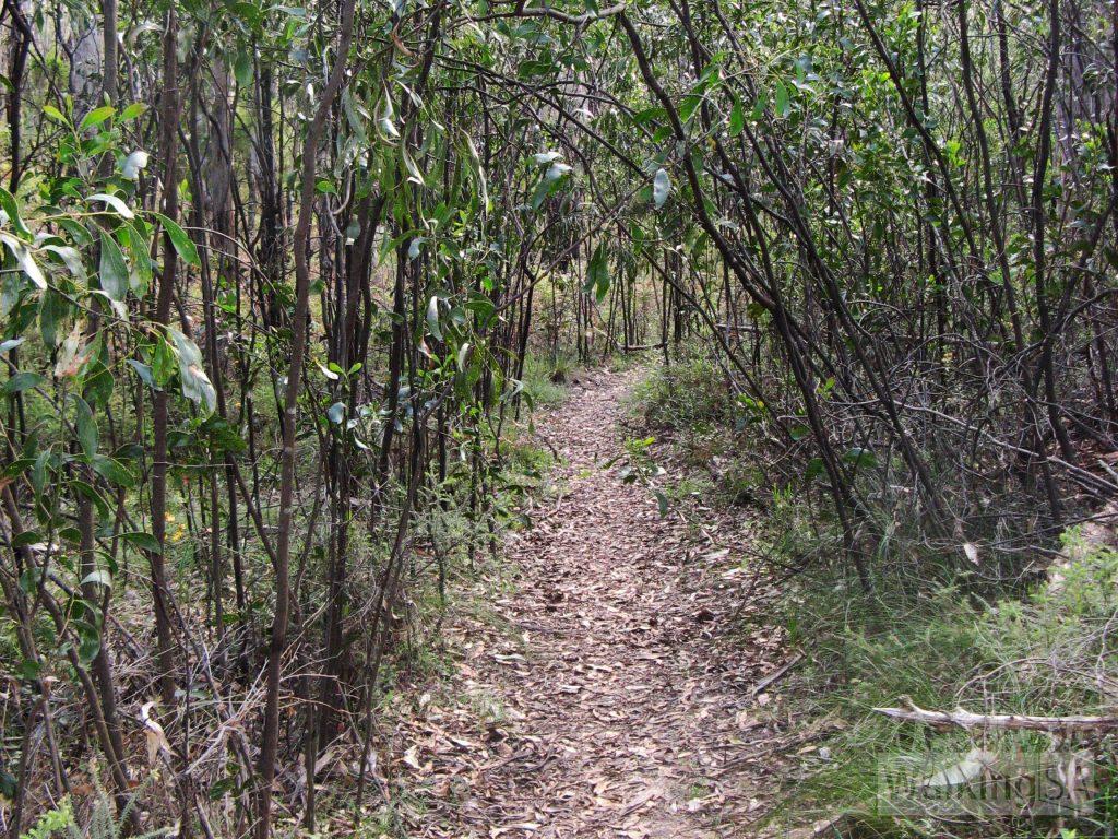 Skink Trail