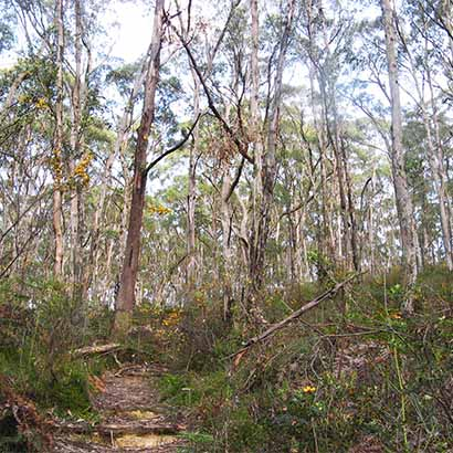 Bandicoot Trail, Mark Oliphant Conservation Park