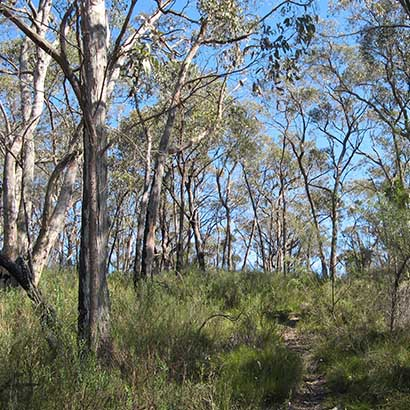 Wander through Mylor Conservation Park